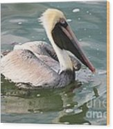 Pretty Pelican In Pond Wood Print