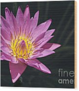 Pretty Pink And Yellow Water Lily Wood Print