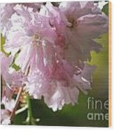 Pretty Pink Cherry Blossoms Wood Print