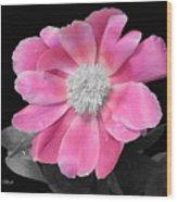 Pretty Pink Petals  Wood Print