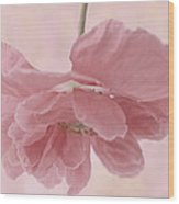 Pretty Pink Poppy Macro Wood Print