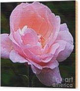 Pretty Pink Rose Wood Print