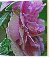 Pretty Pink Rose Wood Print