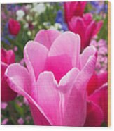 Pretty Pink Tulip And Field With Flowers And Tulips Wood Print