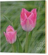 Pretty Pink Tulips Wood Print