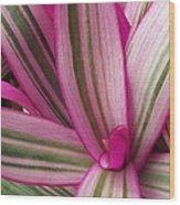 Pretty Plant Leaves 2 Wood Print