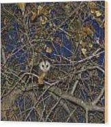 Pretty Pretty Possum Iv Wood Print