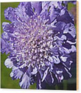 Pretty Purple Flower Wood Print