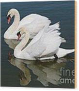 Pretty Swan Pair Wood Print