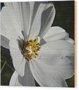 Pretty White Cosmos Wood Print