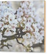 Pretty White Flowering Tree In Spring Wood Print