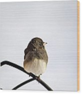 Pretty Winter Junco Wood Print by Christina Rollo