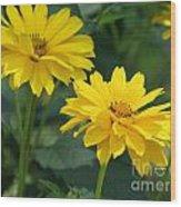 Pretty Yellow False Sunflowers In Bloom Wood Print