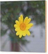 Pretty Yellow Flower Wood Print