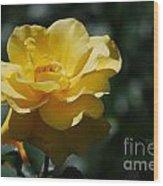 Pretty Yellow Rose Blossom Wood Print