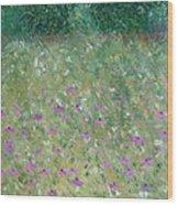 Priairie Cone Flowers Wood Print