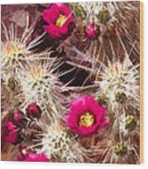 Prickley Cactus Plants Wood Print
