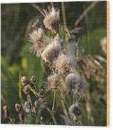 Prickly Beauty Wood Print