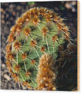 Prickly Cactus Leaf Green Brown Plant Fine Art Photography Print  Wood Print