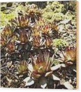 Prickly Lilies Wood Print