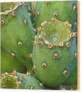 Prickly Pear Cactus 2am-105306 Wood Print