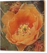 Prickly Pear Cactus Blooming In The Sandia Foothills Wood Print
