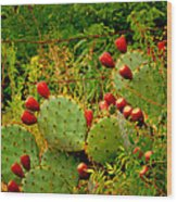 Prickly Pear Cactus Wood Print