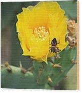Cedar Park Texas Prickly Pear Cactus In Flower Wood Print