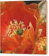 Prickly Pear In Bloom Wood Print