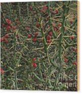Prickly Pete Cactus Wood Print