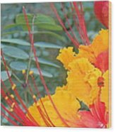 Pride Of Barbados Photo Wood Print