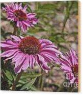 Primadonna Deep Rose Echinacea Wood Print