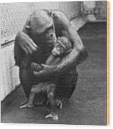 Primate Discipline Wood Print