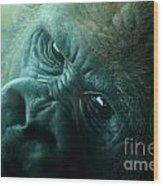 Primate Eyes Wood Print