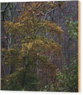 Primeval By James Figielski Wood Print