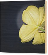 Primrose Moon Wood Print