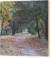 Primrose Path Ramble Wood Print