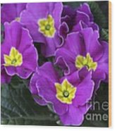 Primrose Purple Wood Print