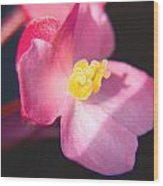 Bright Flower In Your Life Wood Print