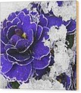 Primulas In The Snow Wood Print