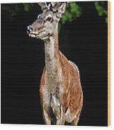 Prince Buck Wood Print by Mariola Bitner