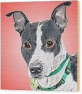 Princess - A Former Shelter Sweetie Wood Print