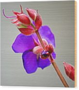 Princess Flower Blooms Wood Print