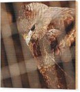 Prisoner Hawk  Wood Print