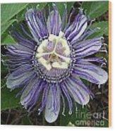 Pristine Passion Flower Wood Print
