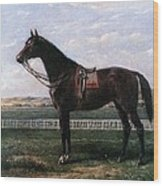 Prize Horse Wood Print