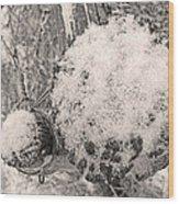 Proche Wood Print
