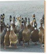 Professional Ducks 2 Wood Print