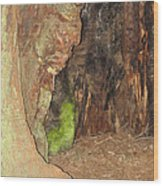 Profile Face In Tree Wood Print