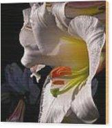 Profile Lilium Regale Wood Print
